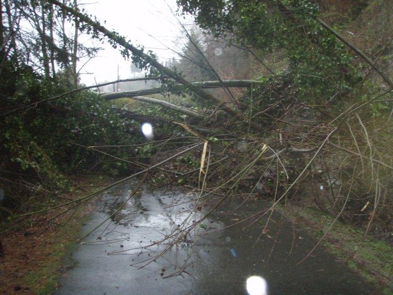 Burke-Gilman landslide