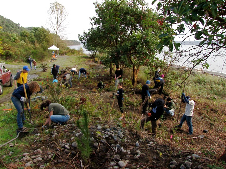 Maury Island Marine Park restoration work