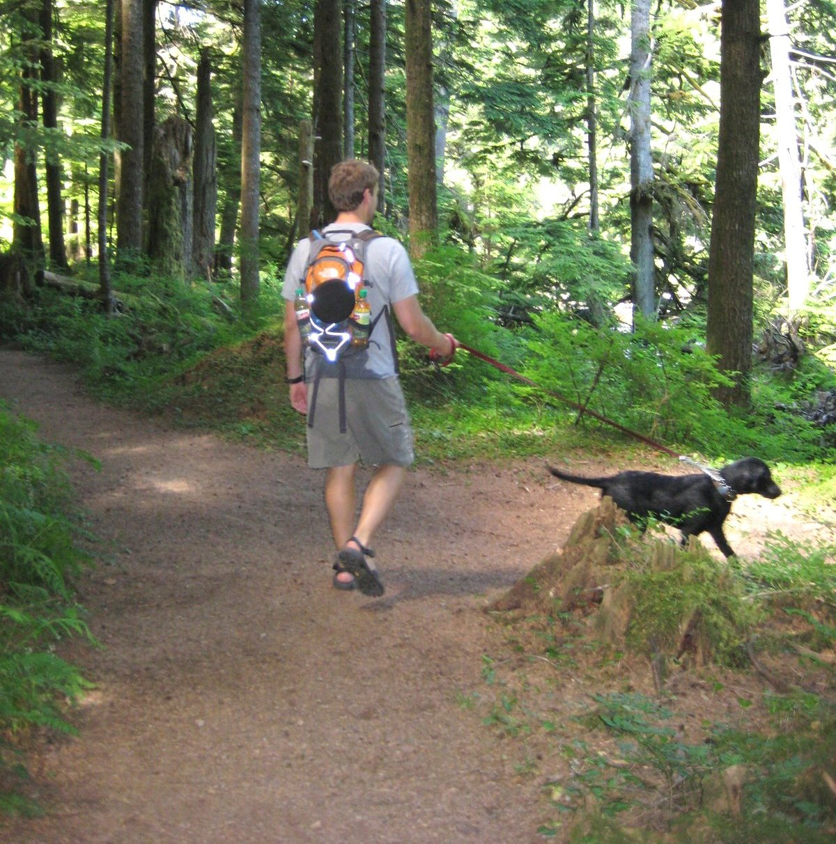Off Leash Dog Parks King County