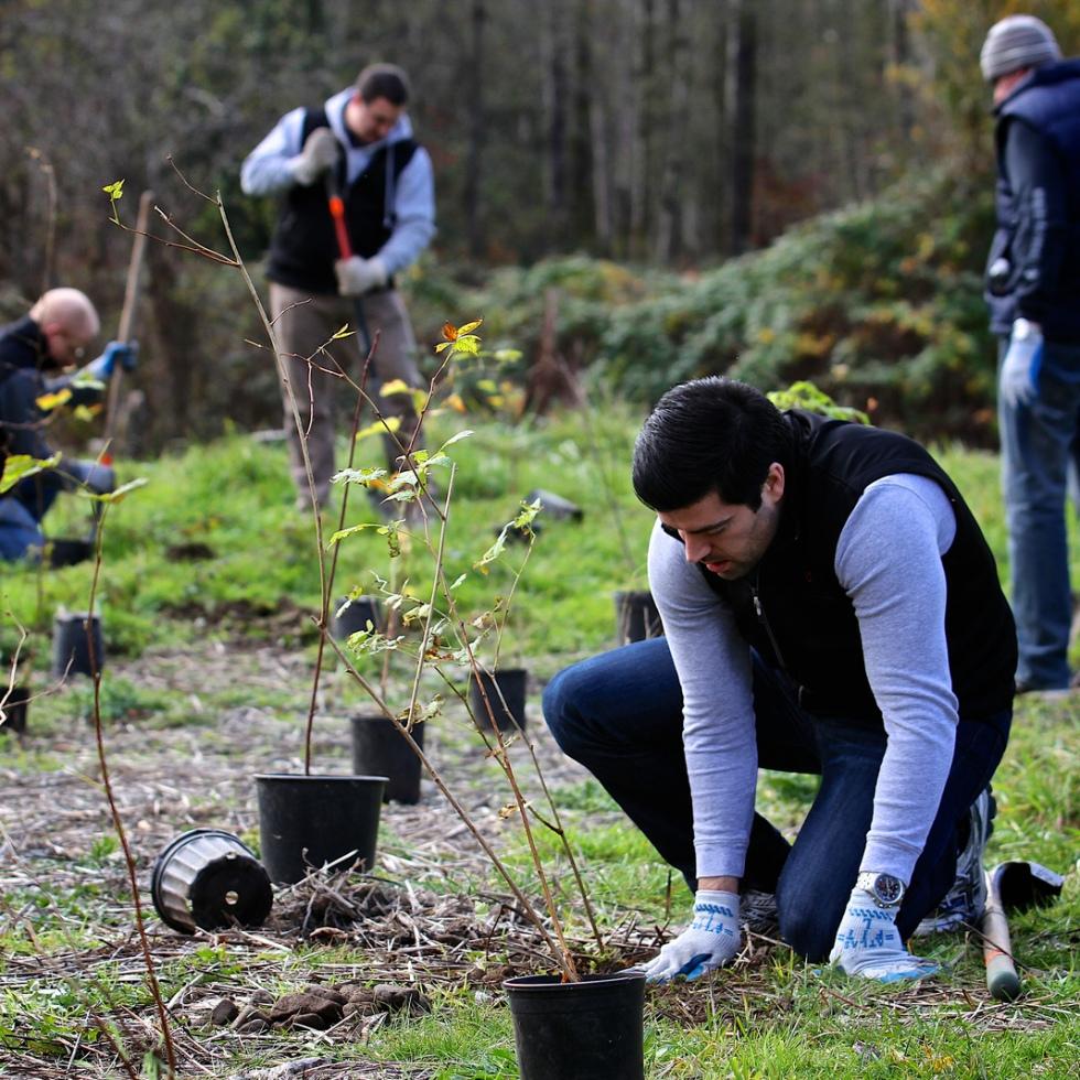 Volunteer Tree Planting Work Party