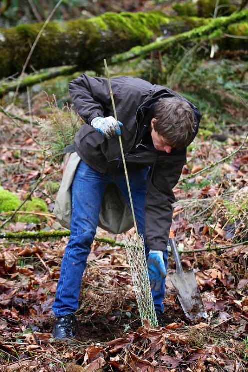 Tree planting at Soaring Eagle