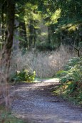 Moss Lake Natural Area