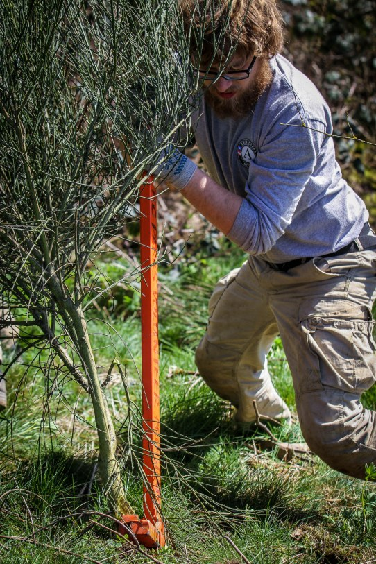 Americorps at work in King County parks