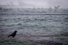 Morning at Marymoor