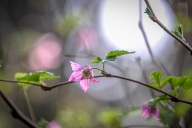 Spring (11 of 17)