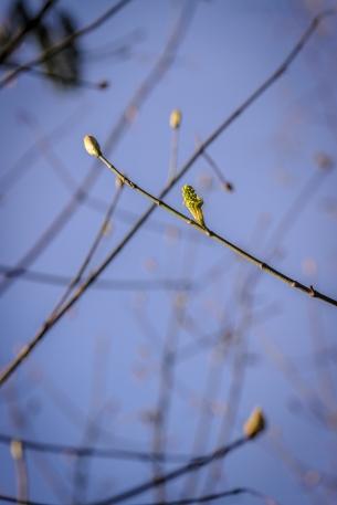 Spring (7 of 17)