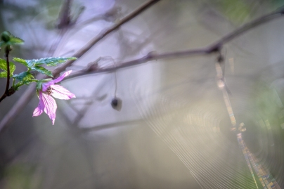 Spring (9 of 17)