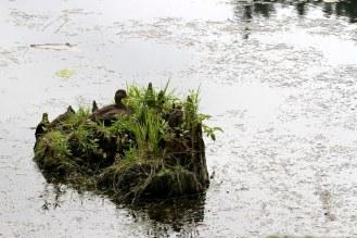 Wildlife at Cavanaugh Pond