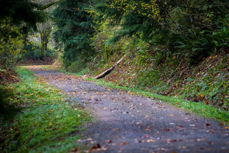 SVT-Snoqualmie_Trail-winding-shot