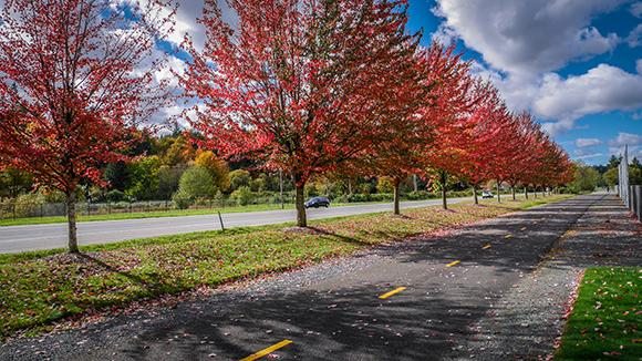 cedar_river_trail-fall-colors