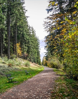 green-to-cedar-rivers-trail-benches-portrait