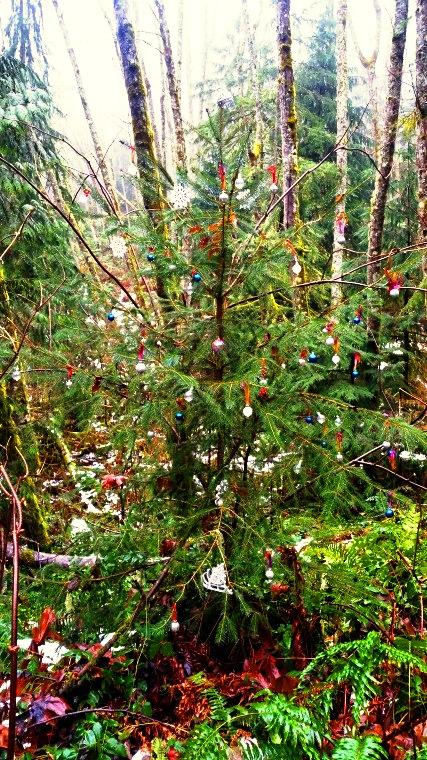 shy-bear-trail-tree-2