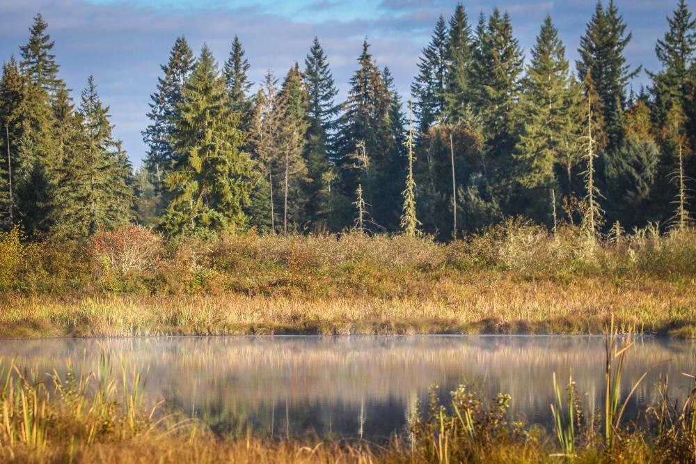 moss_lake
