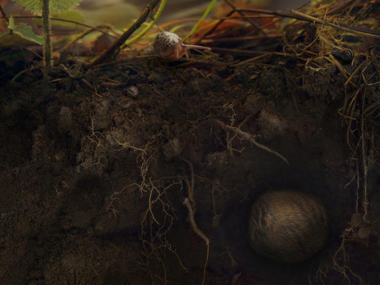 Melinda Hurst Frye, Underneath the Strawberries, 2016, 30″ x 40″ chromogenic print