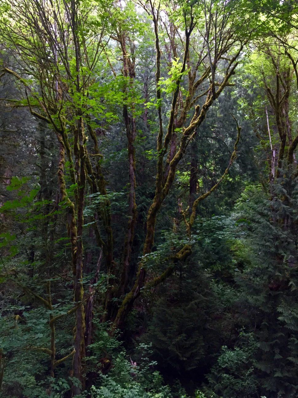 """Preston Snoqualmie Trail, King County Parks, """"Picturing Trails"""""""
