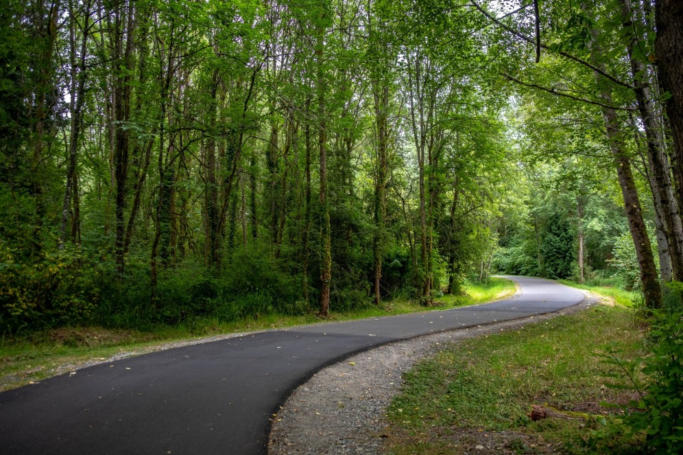 Trees along the Sammamish River Trail