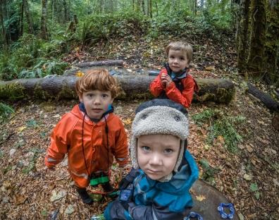 Tiny Trees at Cougar Mountain Regional Wildland Park
