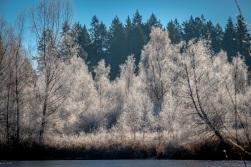 Bassett Pond